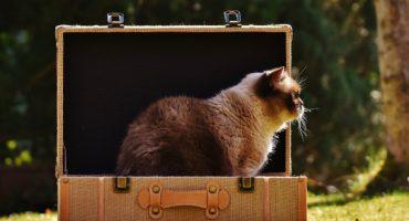 Haussitting: Haustier hüten und günstig Urlaub machen