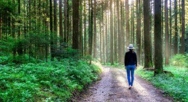 Schwarzwaldgebiet wird Unesco-Biosphärenreservaten